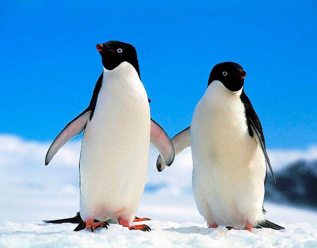 Actualidad Actualidad Estos dos pingüinos gays celebran 10 años como pareja